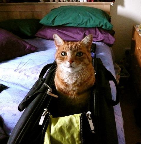 Lleva a tu mascota de viaje