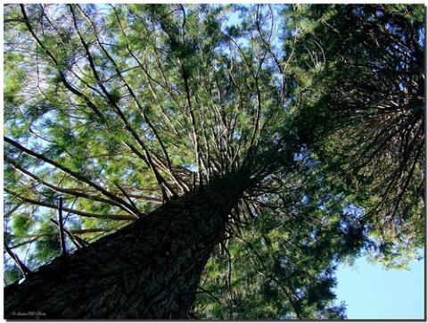 Parque Natural del Montseny, reserva de la Biosfera