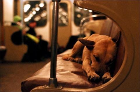 Las mascotas de Bilbao ya pueden viajar en metro y tren