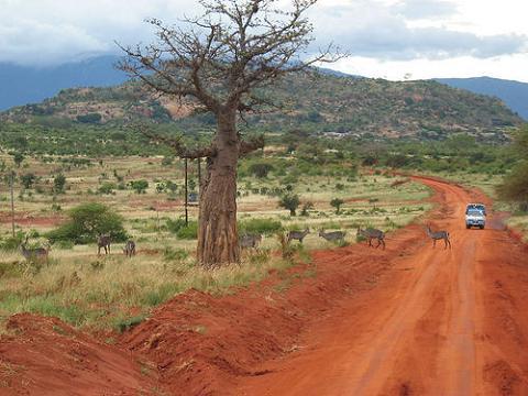 Navidades diferentes: Un safari por Africa