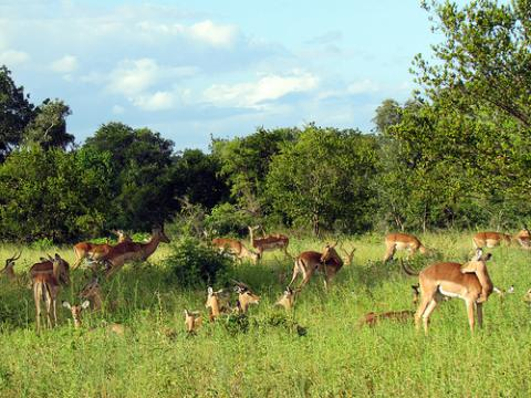 Around the World Grand East África Safari
