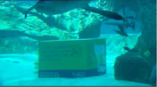 Insólitos paquetes de Correos regalan vueltas al mundo