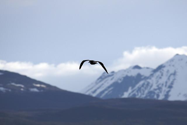 imagen de paisaje antartico