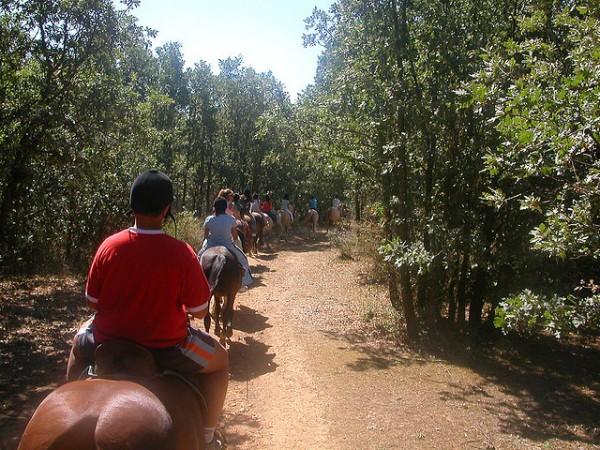 Paseos en caballo