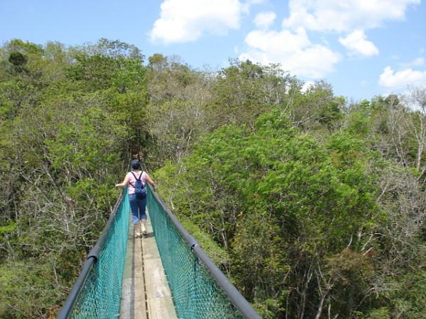 Imagen de un puente colgante