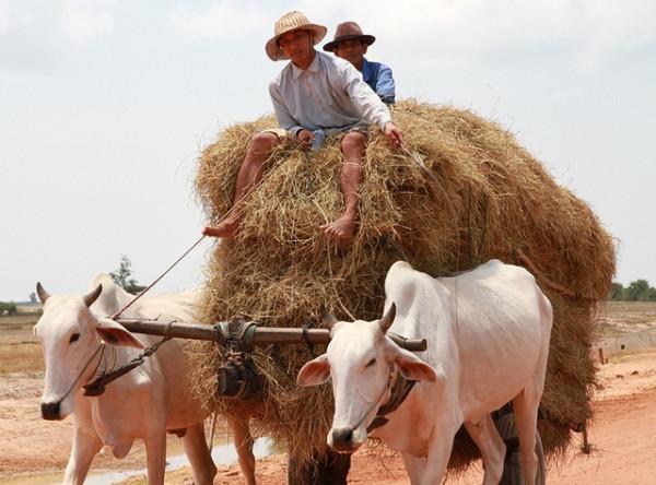 Imagen de Camboya
